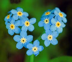 forget-me-nots-heart